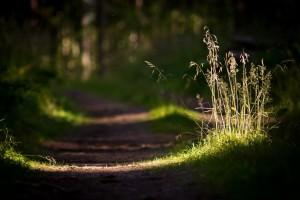 sunlight wallpaper forest