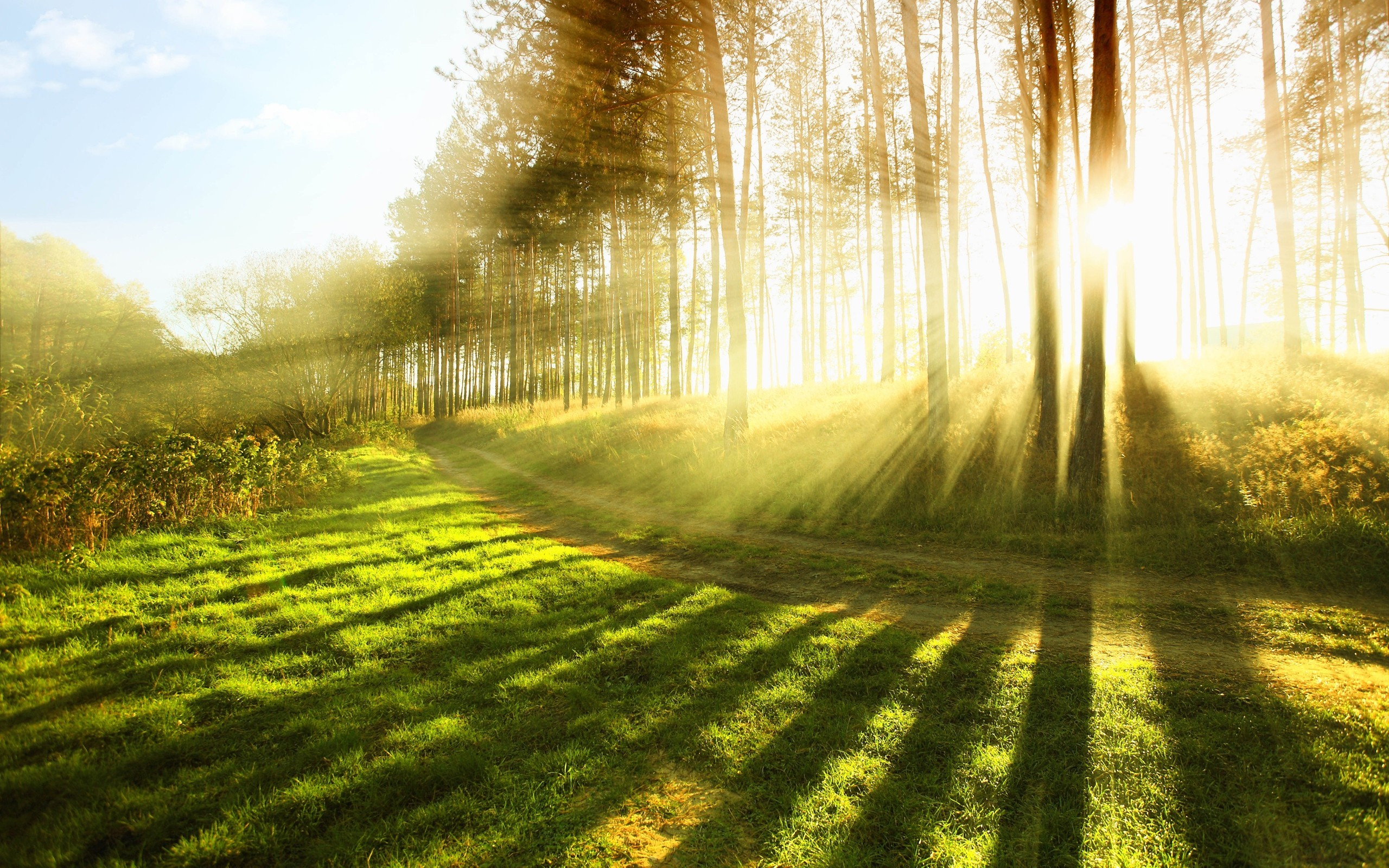 sunlight wallpaper forest nature