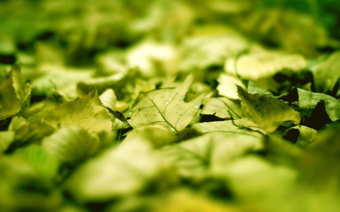 sunlight wallpaper leaf