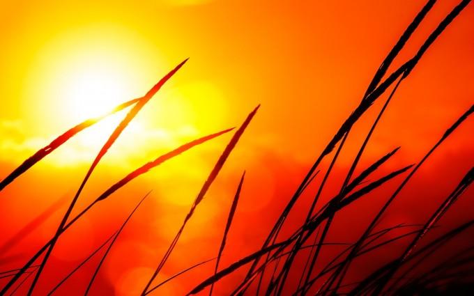 sunlight wallpaper orange red