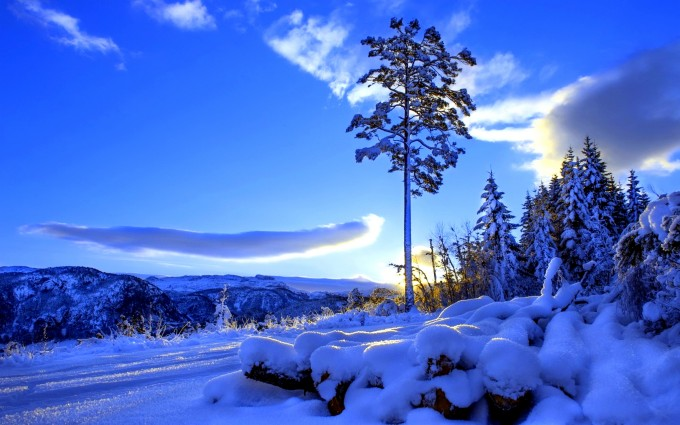 sunlight wallpaper winter