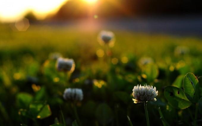 sunrise wallpaper plants