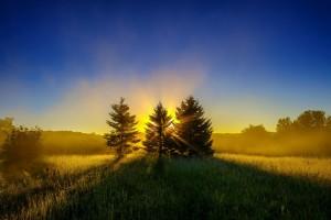 sunrise wallpaper trees