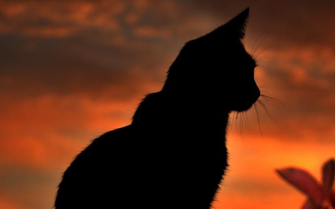 sunset animals