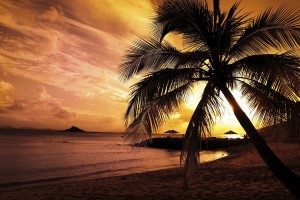 sunset images beach palm