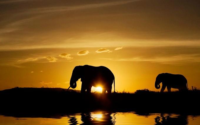 sunset images elephant