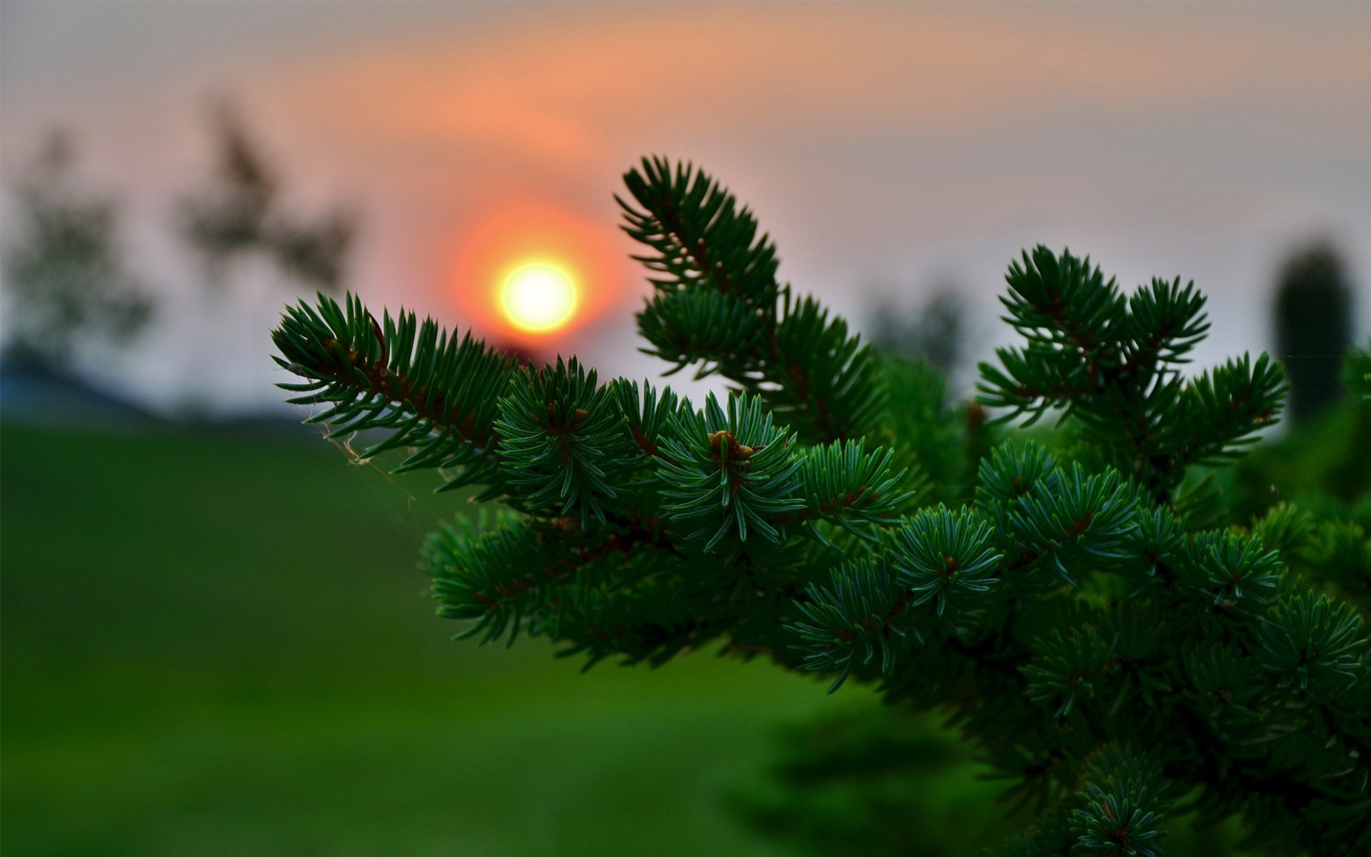 sunset images pine