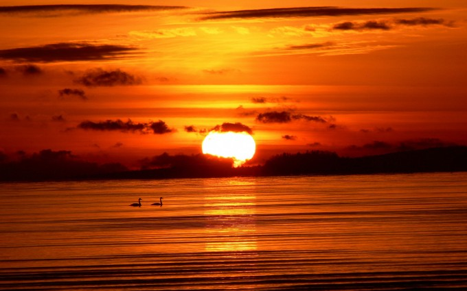 sunset images sea birds