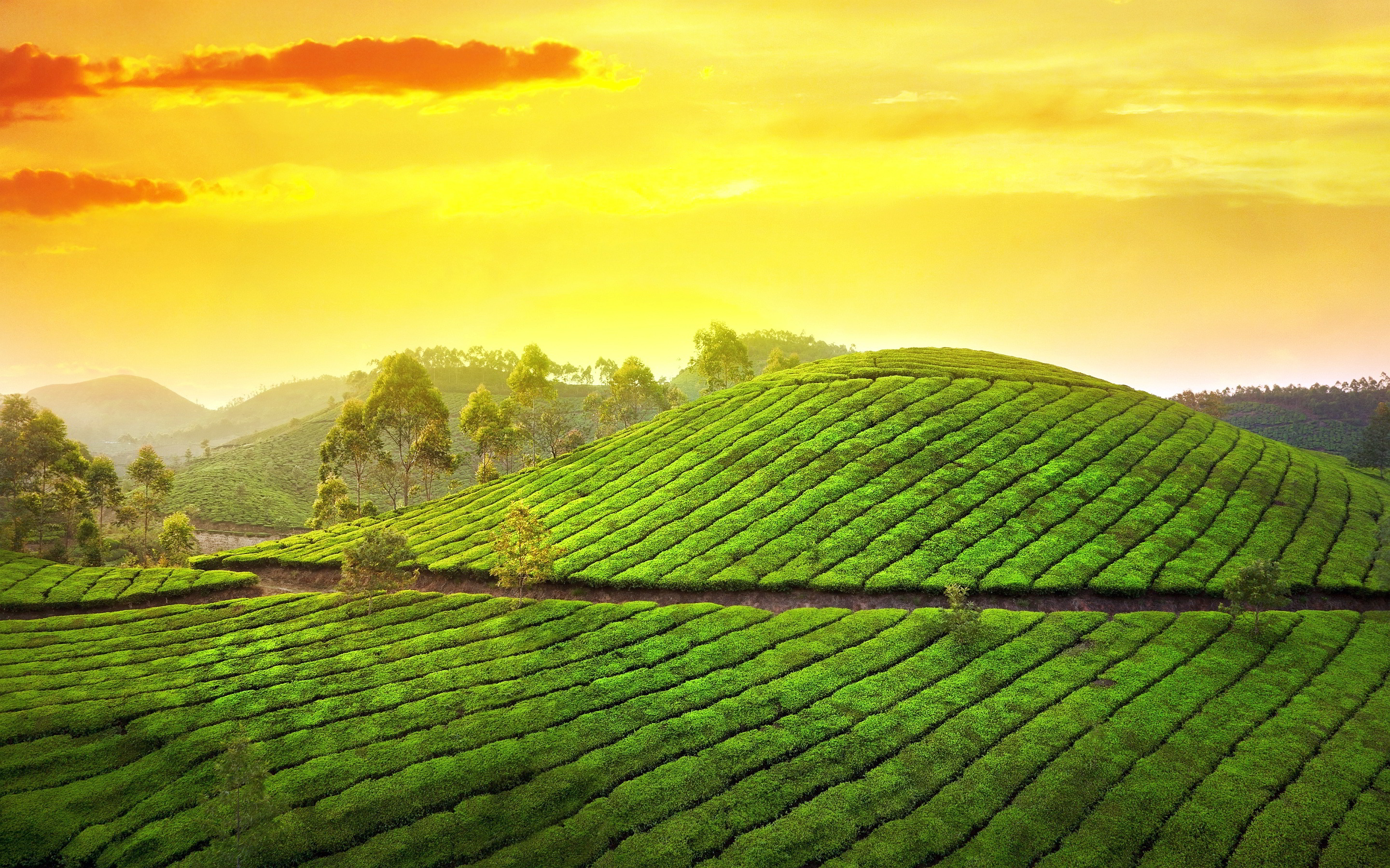 sunset pictures tea garden
