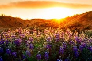 sunset wallpaper download