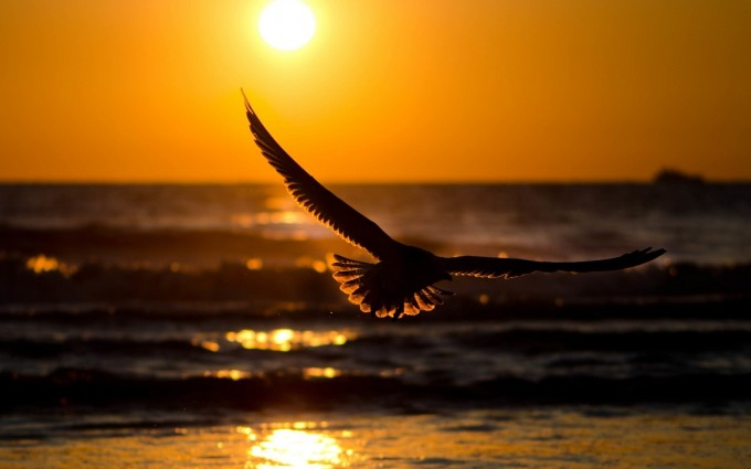 sunset wallpapers bird