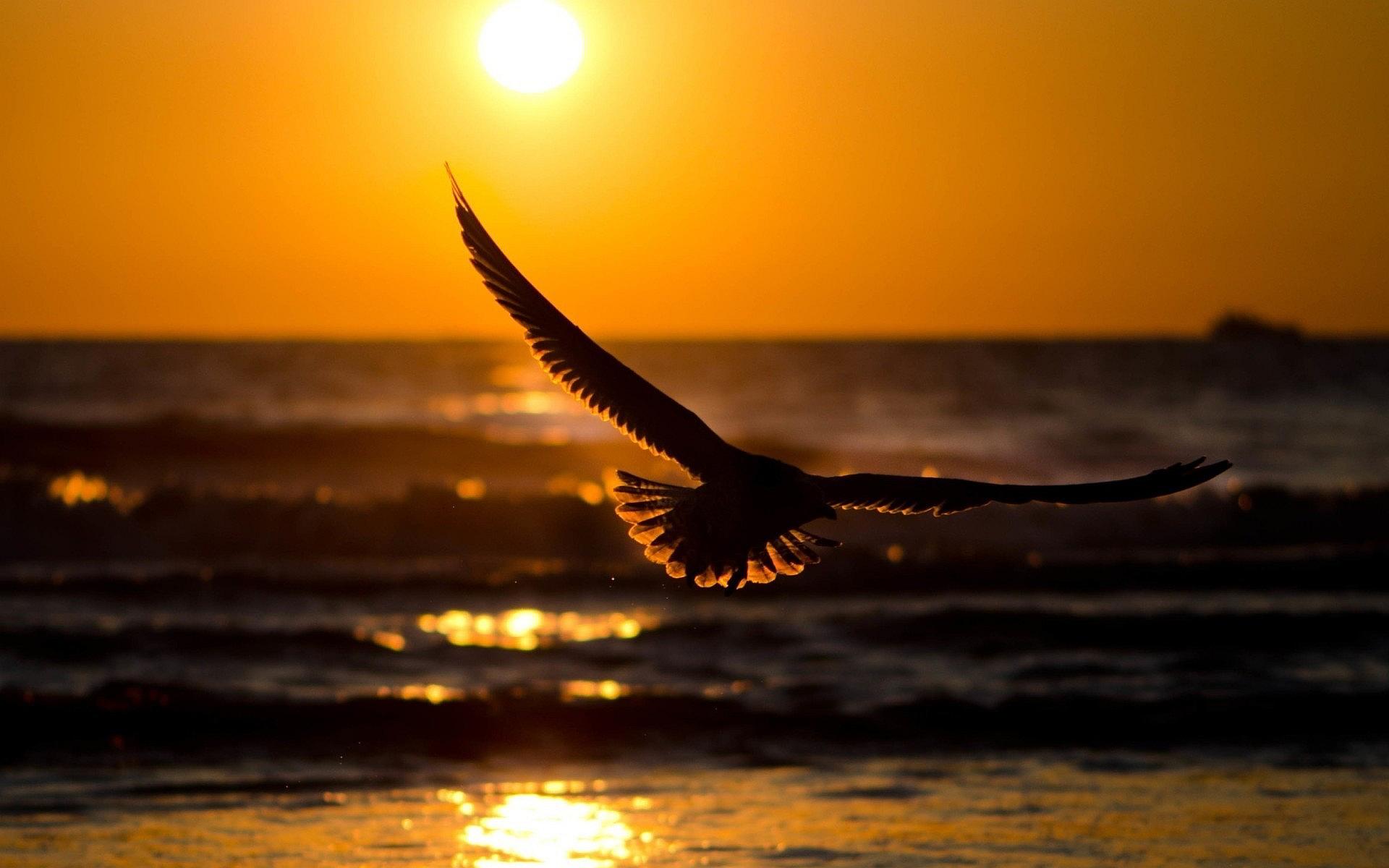 sunset wallpapers bird