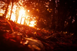 sunset wallpapers forest