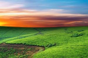 sunset wallpapers green