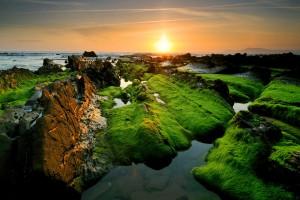 sunset wallpapers moss
