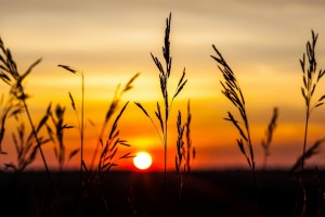 sunset wallpapers nature scenery
