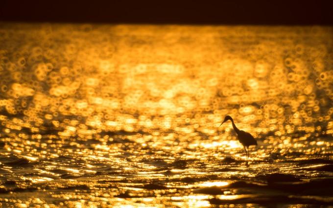 sunset wallpapers water beach