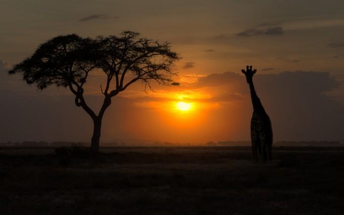 sunset wildlife
