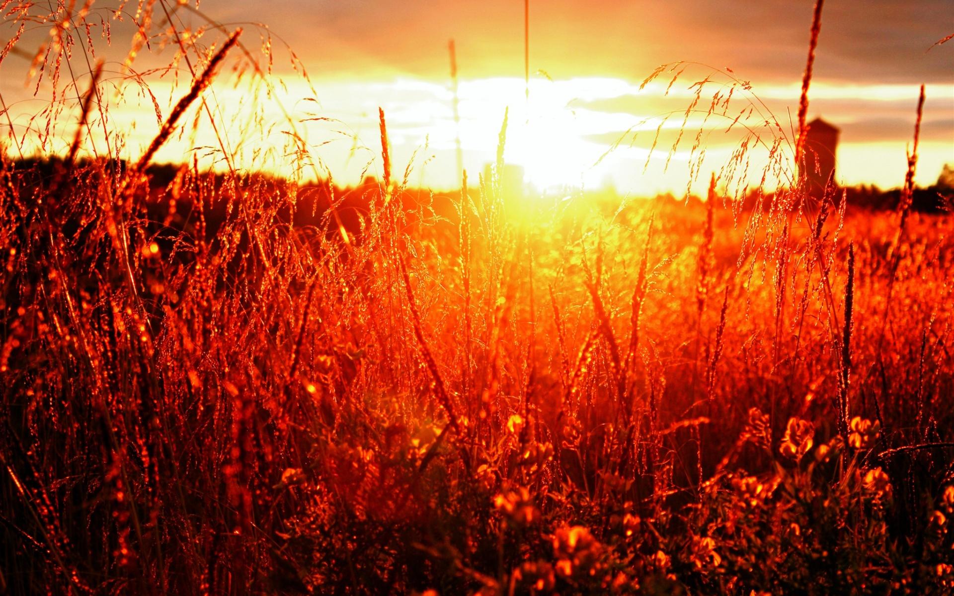 sunshine image