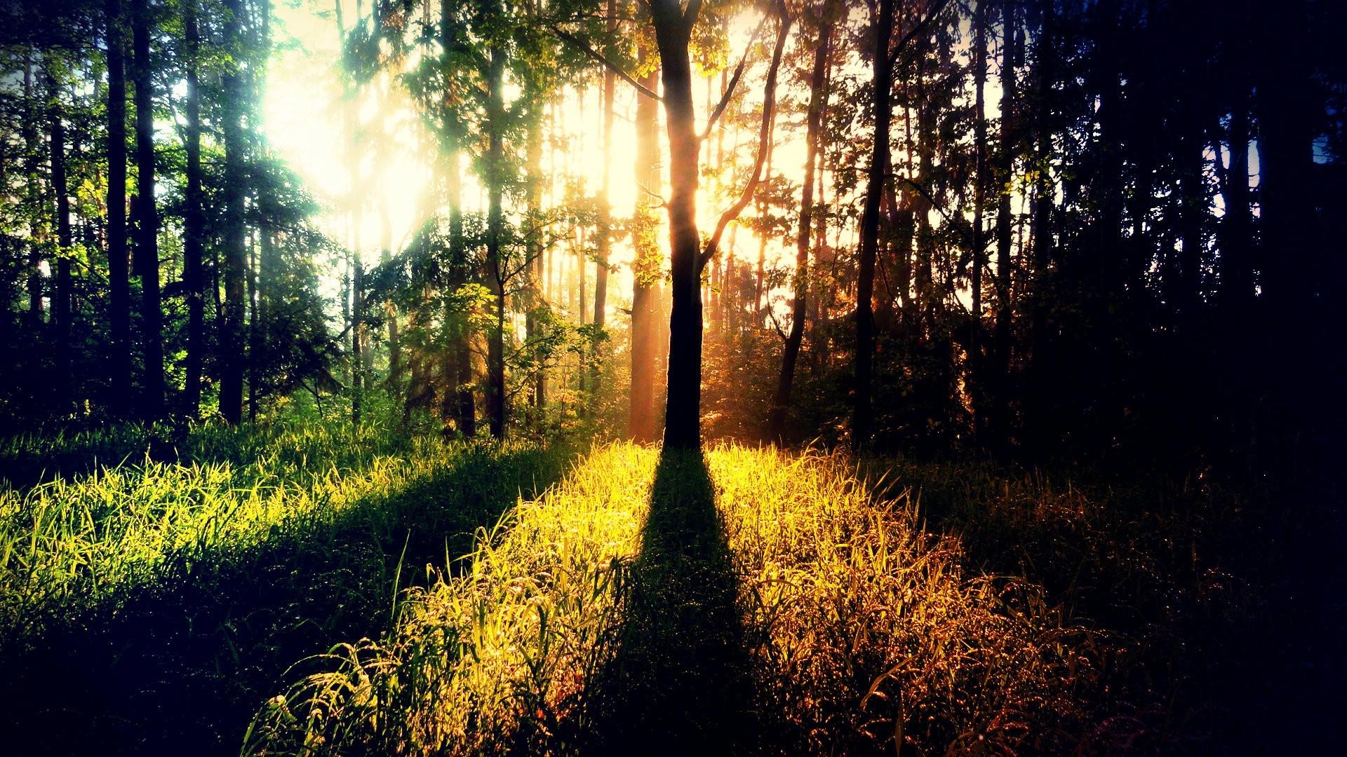 sunshine images photography