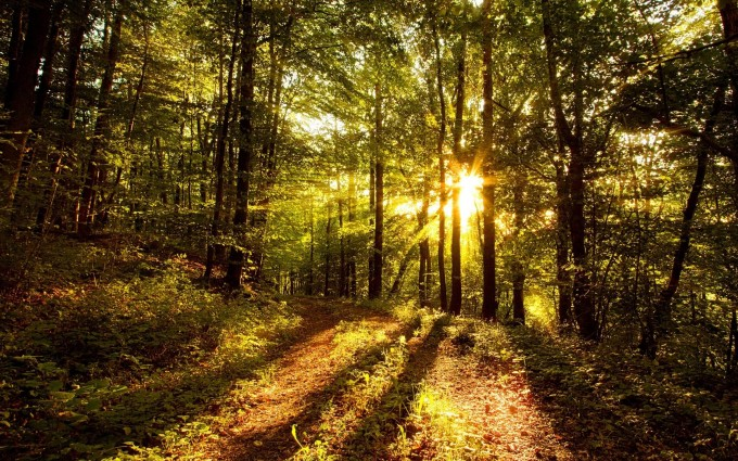 sunshine pictures forest