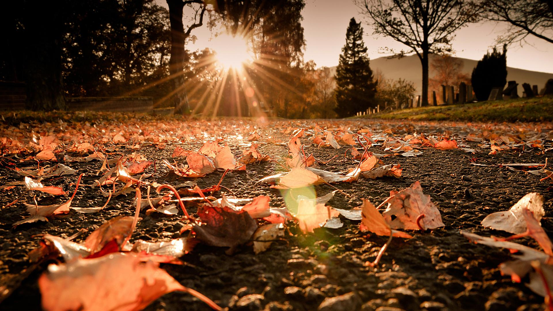 autumn wallpaper hd 1280x1024
