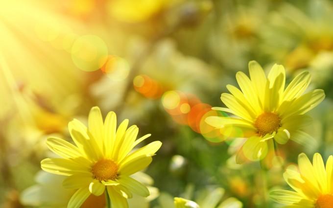 sunshine wallpaper cute flowers