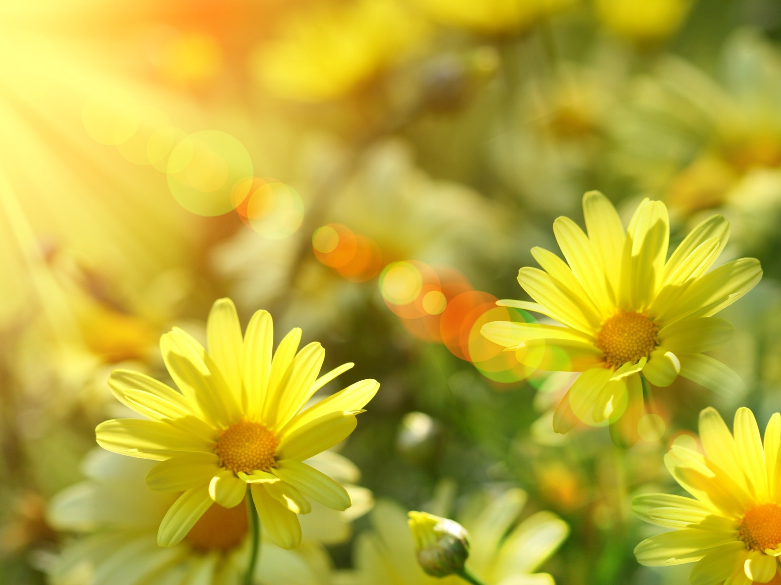 sunshine wallpaper cute flowers