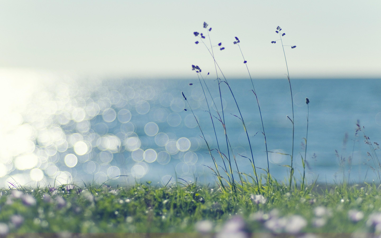 sunshine wallpaper grass