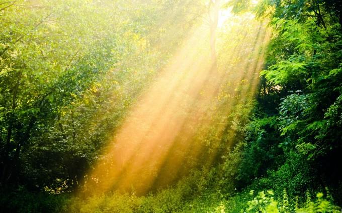 sunshine wallpaper nature