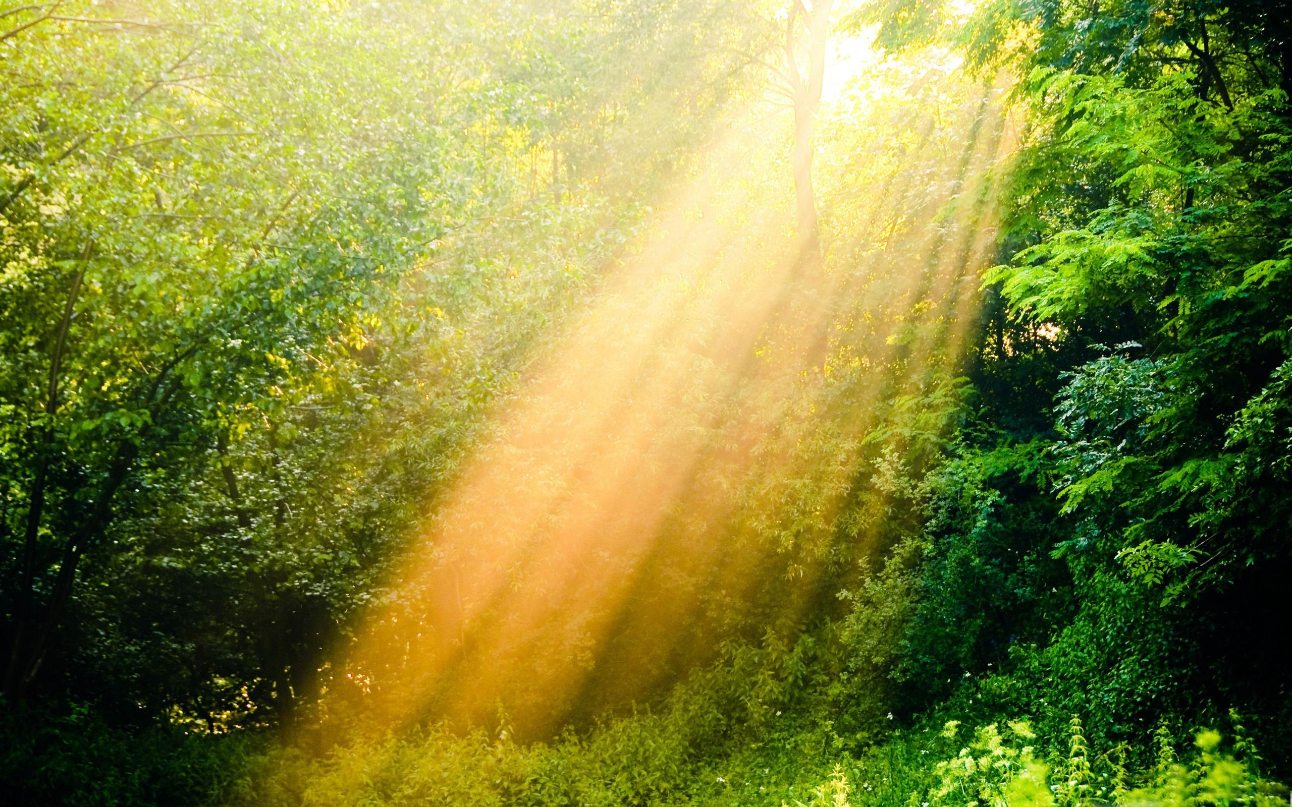 sunshine wallpaper nature