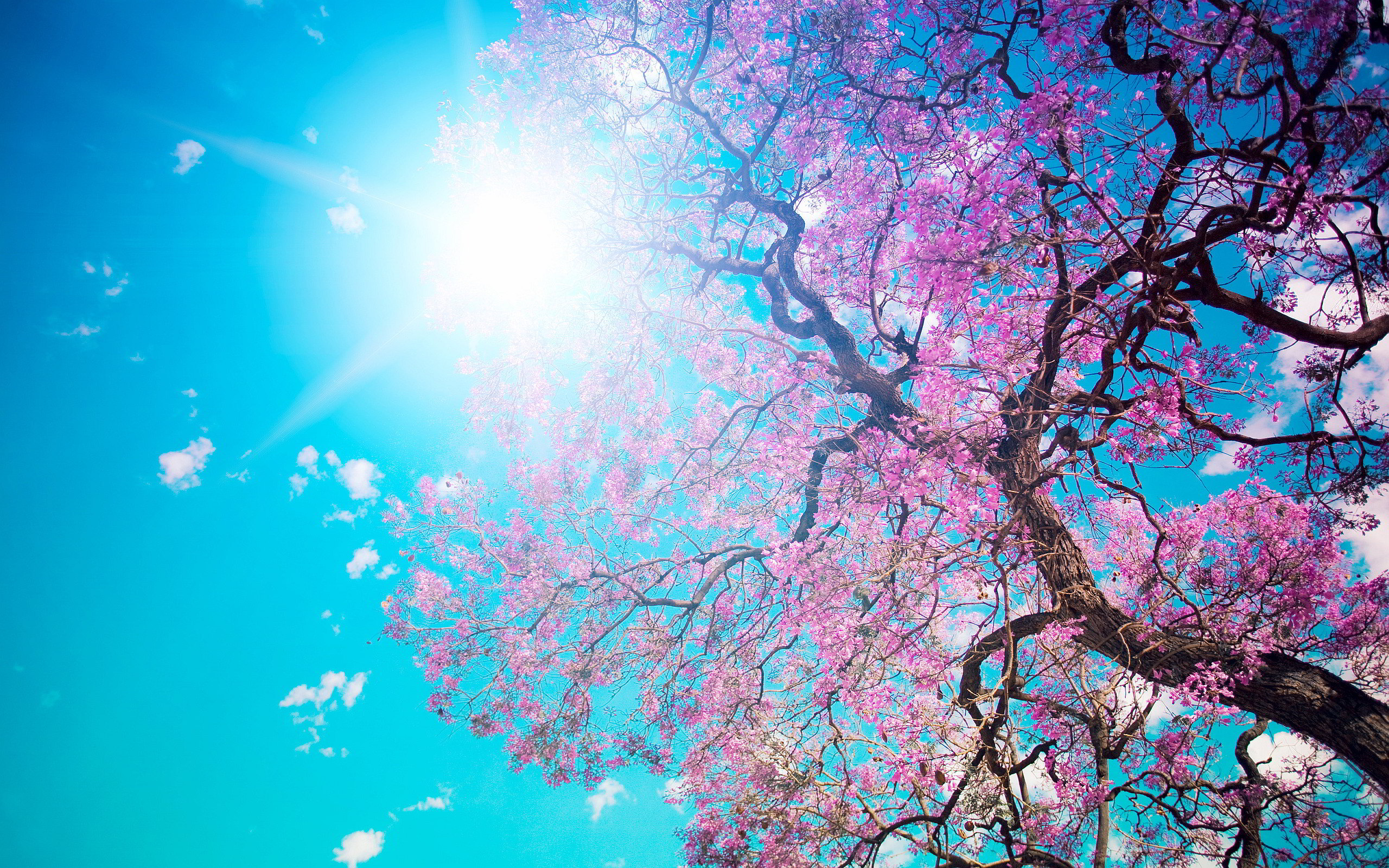 sunshine wallpaper spring