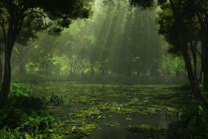 swamp nature