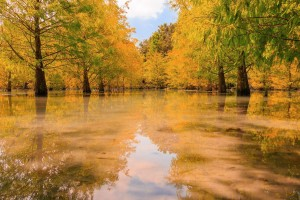 swamp wallpaper autumn