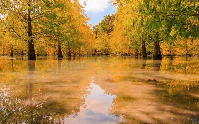 swamp wallpaper autumn
