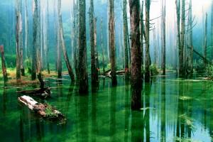 swamp wallpaper green