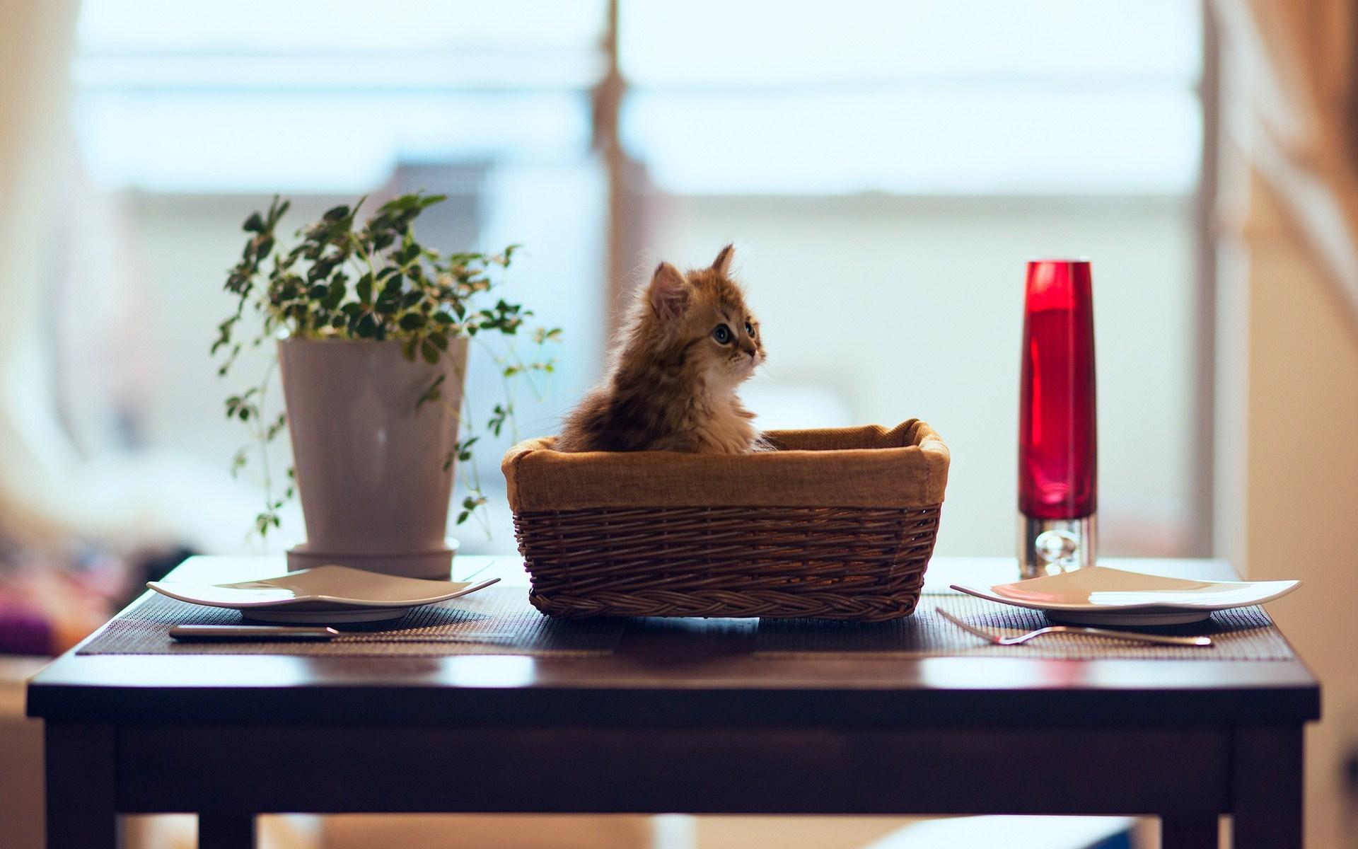 sweet kittens wallpapers