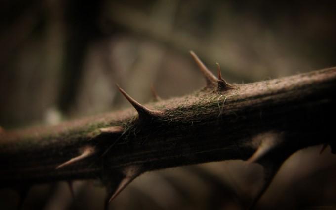 thorns wallpaper