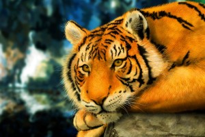 tiger 3d anime
