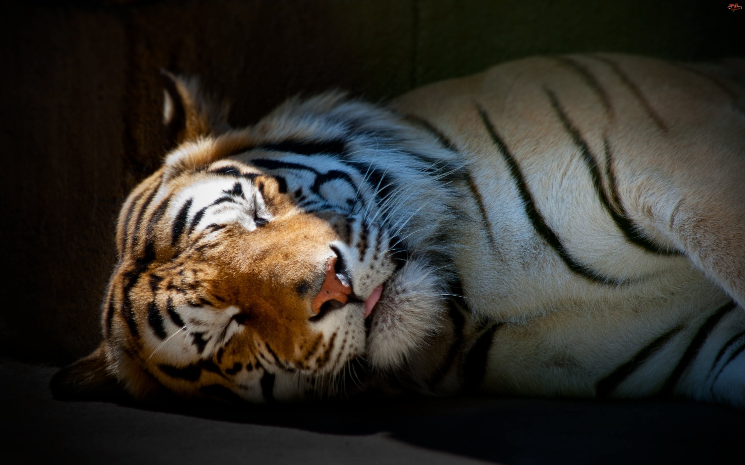 tiger skin wallpaper