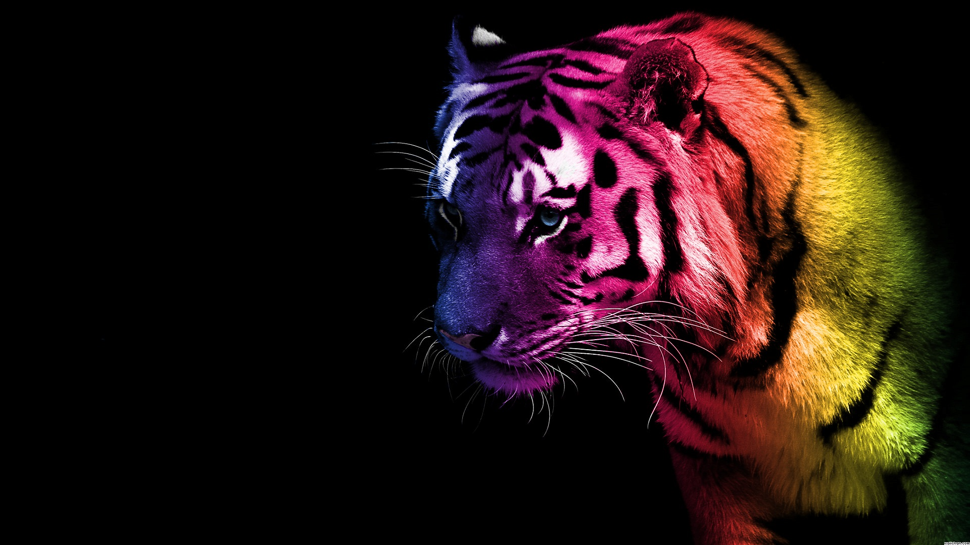 tiger wallpaper in hd