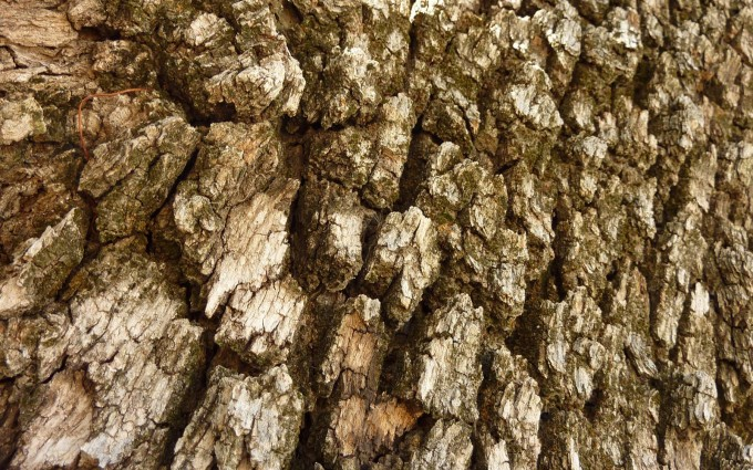 tree bark wallpaper