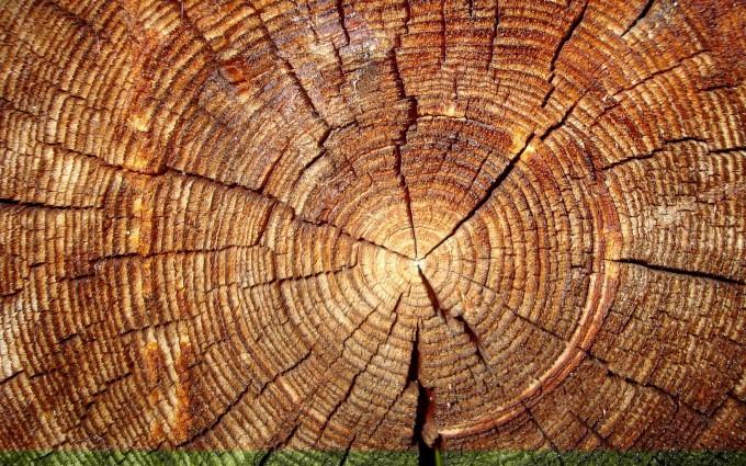 tree pictures