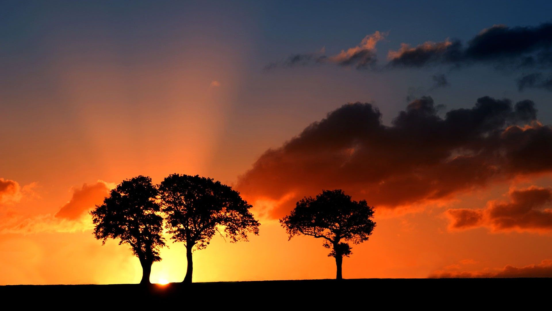 tree silhouette hd