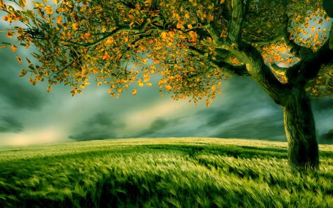 tree wallpaper 3d