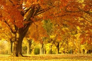 tree wallpaper autumn hd