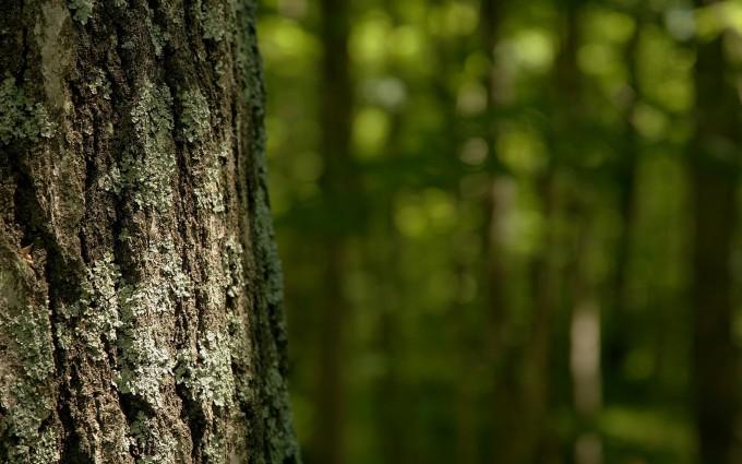 tree wallpaper bark download