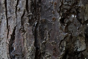tree wallpaper bark hd