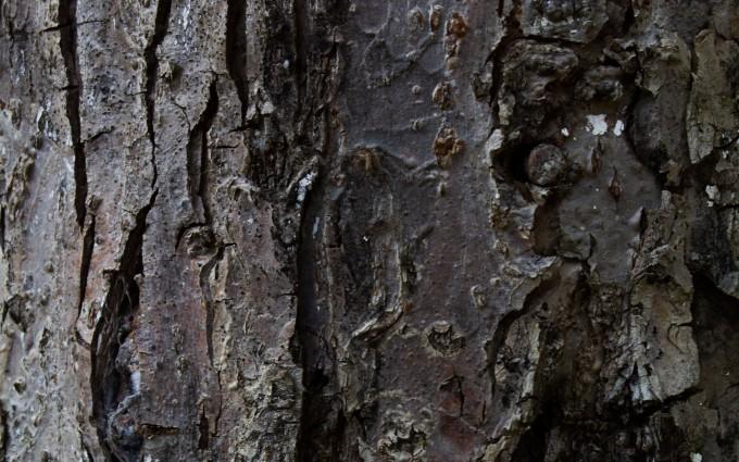 tree wallpaper bark hd