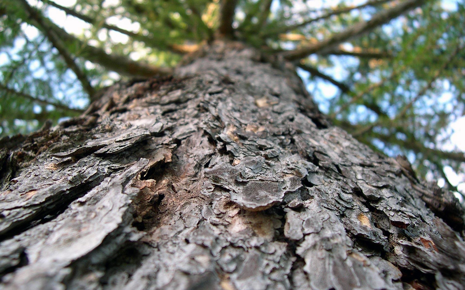 tree wallpaper bark